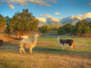 Mountain Goat Lodge Goat Farm - South Central Colorado vacation rentals