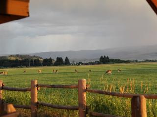 Relaxation, Wildlife, and the Madison River - Ennis vacation rentals