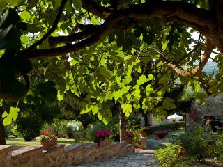 MIMOSA- Tuscany apartment, free Wi-fi and pool - Radda in Chianti vacation rentals