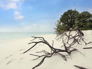Tranquil Nature - Ungoofaaru Inn - Raa Atoll vacation rentals