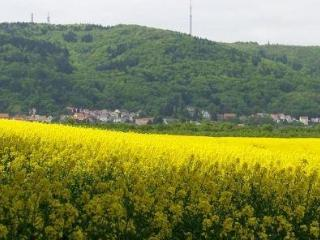 So much to see  - quaint village of Dannenfels ! - Rhineland-Palatinate vacation rentals