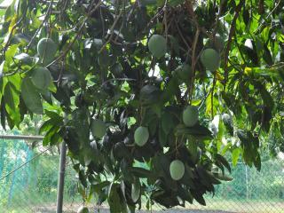 Seven Palms Villa - Runaway Bay Jamaica - Runaway Bay vacation rentals