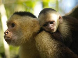 Monkey Hut, Puerto Jimenez, OSA Peninsula - Osa Peninsula vacation rentals