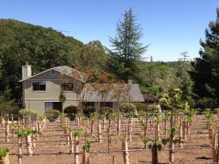 Heart of Sonoma Wine Country, Vineyard & Hot tub - Napa vacation rentals