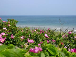 A Cape Cod Getaway - Walk to Sea Street Beach - Dennis Port vacation rentals