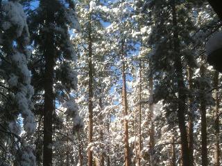 Cabin, at Convention Ctr, lake, ski, wifi - Big Bear City vacation rentals