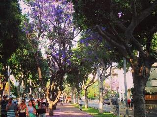 Tlv beach, market, Shenkin NEW LISTING-special pri - Tel Aviv vacation rentals