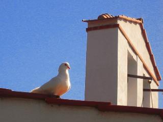 Bird House In Ex Convent - World vacation rentals