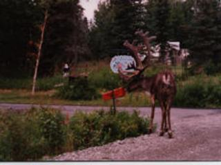 Visiting Caribou - AllSeasons Bed and Breakfast - Kenai - rentals