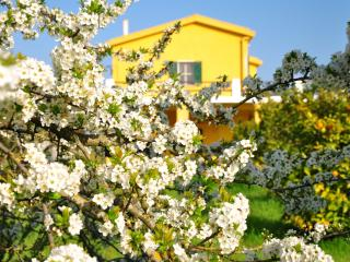 Villa Stella Maris- piece of heaven - Alghero vacation rentals