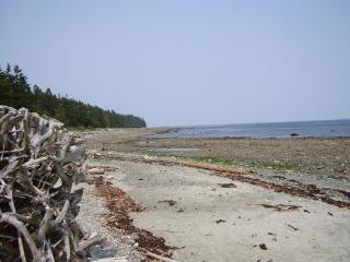Pilgrim's Seaside Cabin - Fanny Bay vacation rentals