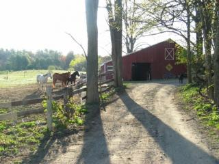 4 Bedroom Barn Conversion on 26 Acre Horse Farm - Accord vacation rentals