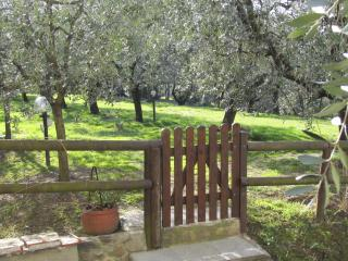 The Vineyard - in the heart of the Lucca wine road - Florence vacation rentals
