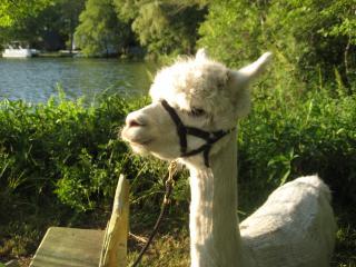 Alpacaville Farm Retreat Oasis - Norton vacation rentals