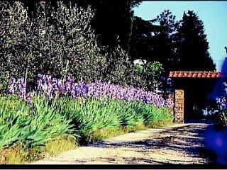 AZIENDA AGRICOLA TORRE BIANCA - San Casciano in Val di Pesa vacation rentals