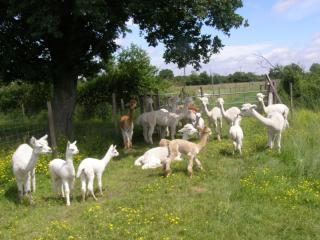 Relax on Holiday with Alpacas - Argenton-les-Vallees vacation rentals