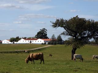 Herdade da Negrita - Beja vacation rentals