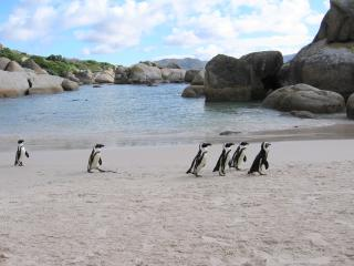 Cape Town:  Boulders Skye - Simon's Town vacation rentals