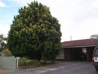 Pine Haven - Perth vacation rentals