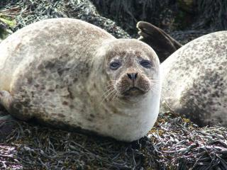 Seal Cottage - South Uist vacation rentals