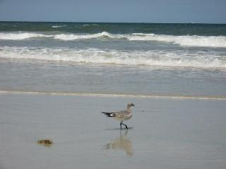 Spacious End Unit  Retreat Only Steps To The Beach - Ormond Beach vacation rentals
