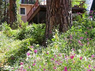 Brannon (Sun-Sun) 6p - Yosemite Area vacation rentals