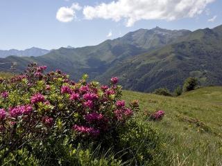 Appartamento Rosa di Monte - Biella vacation rentals