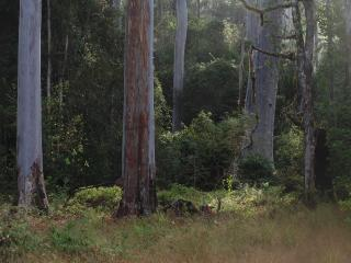 Tranquil Lyrebird Cottage - New South Wales vacation rentals