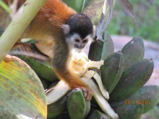 Costa Rican tropical paradise - Drake Bay vacation rentals