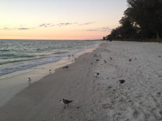 Charming Cottage-Less than 1 mile to Vanderbilt Beach - Naples vacation rentals