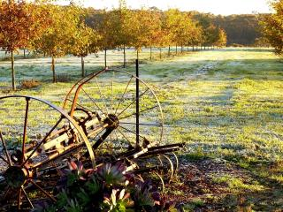 Black Cat Cottage & Truffles - Creswick vacation rentals