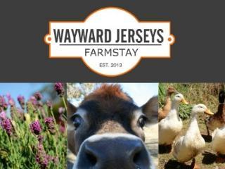 Wayward Jerseys Farmstay - Armidale vacation rentals
