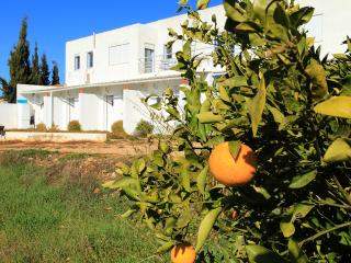 Quiet  place in Center Algarve - Alcantarilha vacation rentals