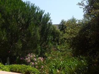 les pins ensoleilles - Saint-Maxime vacation rentals
