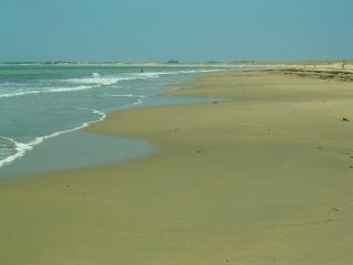 Hauts de Nige, forest & beach - Saint-Georges d'Oleron vacation rentals