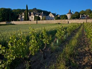 CHATEAU DE LA VAUGUYON CHINON - Chinon vacation rentals