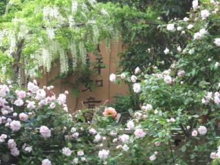 Apple Tree Apartment - Wellington vacation rentals