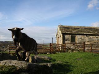 Piglet's House, Hebden Bridge - Hebden Bridge vacation rentals