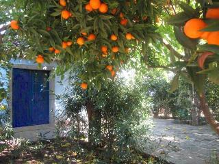 House 'Aromas and citrus' in nature reserve Timpa - Acireale vacation rentals
