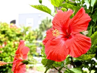 Hibiscus Resort - D202, Ocean View, 3BR/2BTH, 3 Pools, Wifi - Saint Augustine vacation rentals
