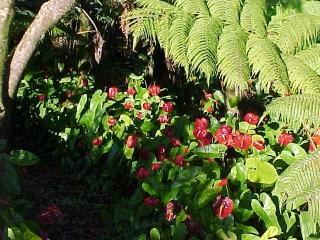 Tropical Rain Forest - Hilo vacation rentals
