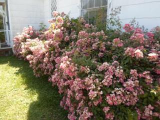 Cozy home, walk everywhere - Belvidere vacation rentals
