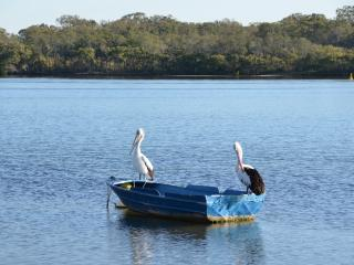 Bayz on the River.  PET FRIENDLY - Maroochydore vacation rentals