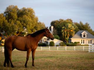 3 Bedroom Luxury Equestrian Farmhouse - Ocala vacation rentals
