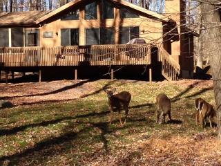 The Pine Cone Cabin - Gouldsboro vacation rentals