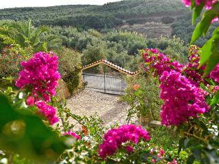 Olive Farm Villa, with private pools - Chania Prefecture vacation rentals