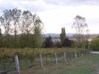 House in the vineyards - Mudgee vacation rentals