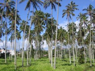 Village Manor A21Cozy, walk to beach!2 BR/1.5 bath - Kapaa vacation rentals