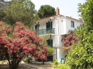 Strophilia Apartments | Koukounaries | Skiathos - Skiathos Town vacation rentals