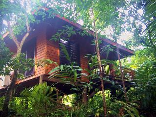Wildwood set on organic orchard in Cape Tribulatio - Cassowary vacation rentals
